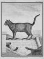 Le Chat des Chartreux - Chartreux Cat- Felis silvestris catus - Gallica - ark 12148-btv1b2300253d-f6.png