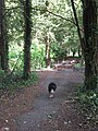 Leaving the yew grove by the main track in Cobblers Pits - geograph.org.uk - 1311607.jpg