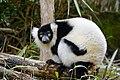 Lemur (26992418998).jpg