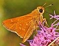 Leonard's Skipper (Hesperia leonardus) (9585109131).jpg