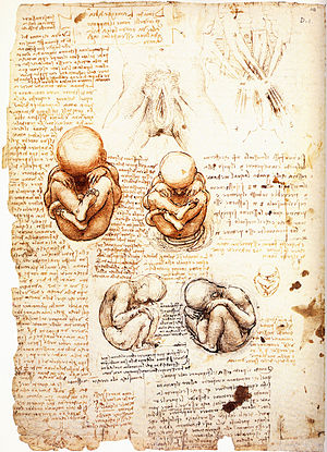 Studies of the Fetus in the Womb - Image: Leonardo da Vinci Studies of the fetus in the womb