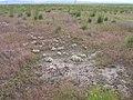 Lepidium papilliferum habitat 1.jpg