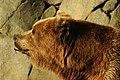 Lightmatter Alaskan brownbear2.jpg