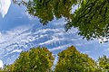 Linden trees and the sky in Planina, Postojna, Slovenia 03.jpg