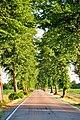 Lindenallee Riesenbecker Strasse 2.jpg
