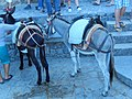 Lindos 851 07, Greece - panoramio (48).jpg