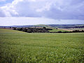 Linseed field, South Downs Way 2.jpg