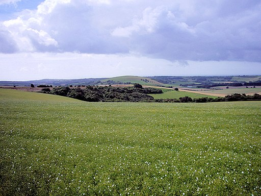 Linseed field, South Downs Way 2