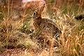 Little bunny in the garden.jpg