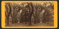 Live Oak Avenue, Bonaventure, from Robert N. Dennis collection of stereoscopic views 8.png