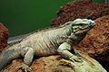 Lizards Alive - Fernbank Museum - Atlanta - Flickr - hyku (3).jpg