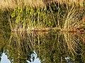 Loch Wayoch - geograph.org.uk - 688079.jpg