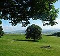 Lonely tree - panoramio (3).jpg