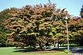 Longwood 2012 10 20 1054 (8672787575).jpg
