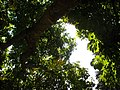 Looking up in the park... - panoramio.jpg