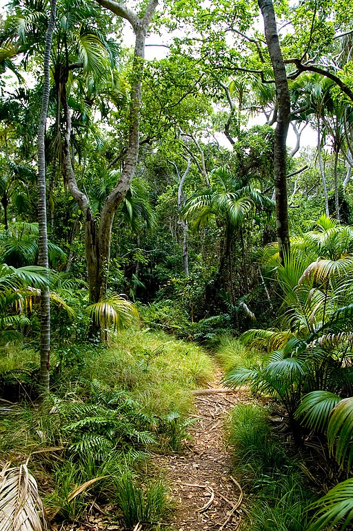 Lord Howe Island forest