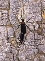 Lovebug coupling.jpg