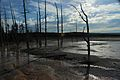 Lower Geyser Basin 31.JPG