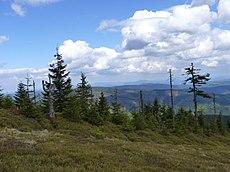 Lysá hora, přírodní rezervace v Beskydech (1).JPG