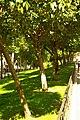 MADRID A.V.U. JARDIN-CINTA S. FRANCISCO EL GRANDE - panoramio (2).jpg