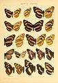 Macrolepidoptera01seitz 0117.jpg