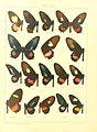 Macrolepidoptera15seit 0019.jpg