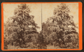 Magnolia-on-the-Ashley, Charleston, S.C, by Havens, O. Pierre, 1838-1912 2.png