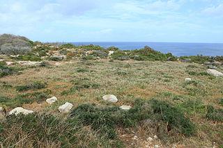 Xrobb l-Għaġin Temple