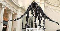 Mamenchisaurus, Field Museum.jpg