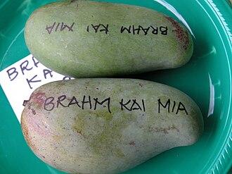 Brahm Kai Meu - 'Brahm Kai Meu' mango