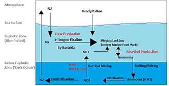 Nitrogen cycle - A schematic representing the Marine Nitrogen Cycle