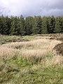 Marshy burn on Dumbarton Muir - geograph.org.uk - 442473.jpg