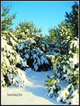 Merry Christmas (16082900125).jpg