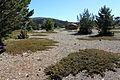 Microrreserva Barranco del Saladillo (7).JPG