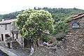 Minerve, France - panoramio (68).jpg