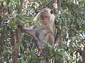Monkey in a tree (7591316598).jpg