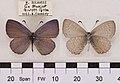 MonodontidesCaraMUpUnAC1.jpg