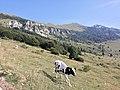 Monte Baldo (VR) - 15.jpg