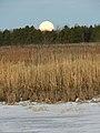 Morning moon (6822760761).jpg