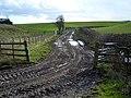 Muddy Track Near Tinwald Parks - geograph.org.uk - 354758.jpg