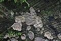 Mushroom (36308334611).jpg