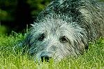 My Family Pets (29902515900).jpg