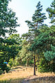 Národní přírodní památka Kleneč 15.jpg