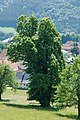 NDOÖ 143 Gsanglinde Viechtwang Scharnstein Mai 15.jpg