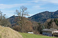NDOÖ 144 Scharnstein Kirchenbauerlinde Dezember 2014 mKb.jpg