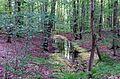 NSG Hakendorfer Wälder Nassfläche.jpg