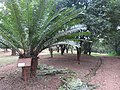 Nairobi Arboretum Park 10.JPG