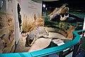 National Museum, Bloemfontein, Free State, South Africa (20537867065).jpg