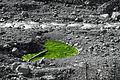 Nationalpark am Spoel-grünes Herz.jpg
