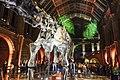 Natural History Museum (15751656506).jpg